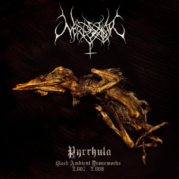 Nordvarger - Pyrrhula