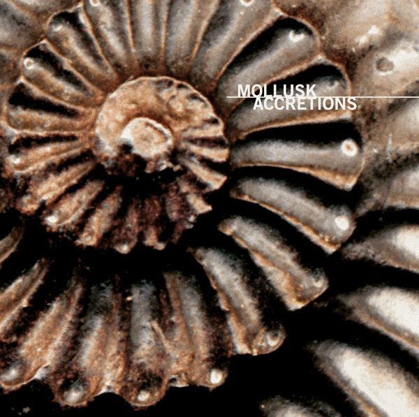 Mollusk - Accretions